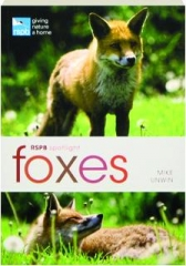 FOXES: RSPB Spotlight