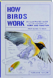 HOW BIRDS WORK: An Illustrated Guide to the Wonders of Form and Function--from Bones to Beak