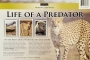 LIFE OF A PREDATOR: World Class Films - Thumb 2