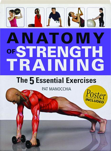 Anatomy Of Strength Training The 5 Essential Exercises